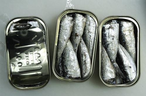 still life of sardines