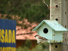 birdhouse, bird,