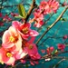 """Membrillero del Japon""""Japanese Quince"" by drear2ta"