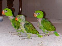 Pet Birds From Cockatiels To Toucans Flashcards Quizlet
