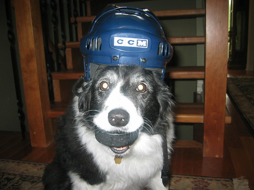 Hockey Dog