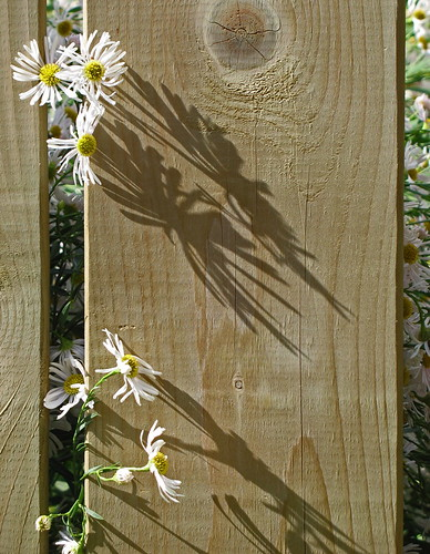 Flowers, shadows