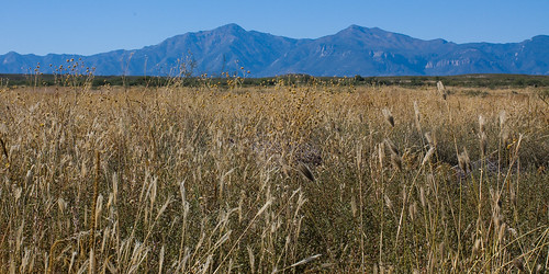 blue arizona grass october skies 21 hiking 2006 dried sanpedroriver huachucamountains ginjersinterestingness 200610