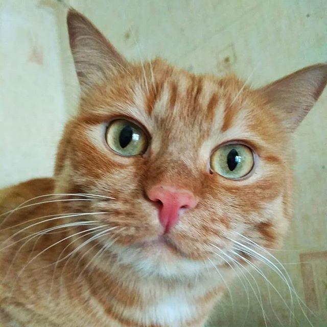 У маминого Рысика на этой фотографии на удивление глупый вид. На самом деле он очень солидный кот, крупненький такой. Но ракурс съёмки может из кого угодно сделать кого попало :-)