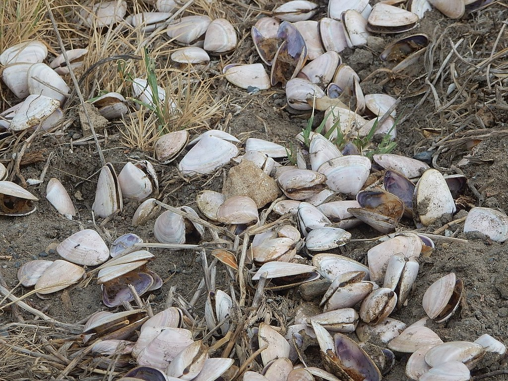 Discarded Shells