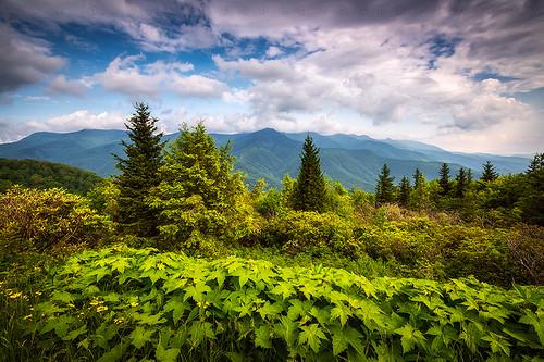 mountmitchell asheville nc blueridgeparkway outdoors scenic mountains nature northcarolina landscape appalachian mountain peak peaks mitchell statepark june spring