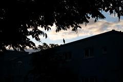 a stork in betondorp