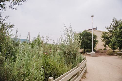 South Los Angeles Wetlands Park