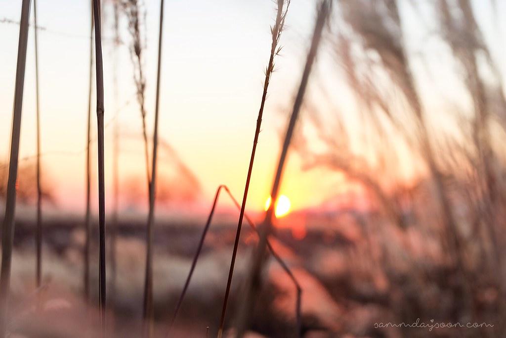 sunset_haneul_park