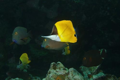 reef pickers