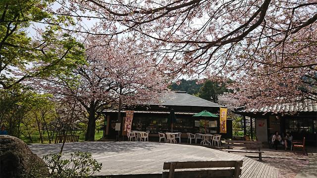 梅の花・佐賀神埼村②