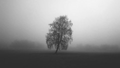 """111. tema """"The lonely birch in the valley"""""""
