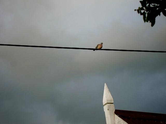 pigeon post point