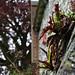 <p><a href=&quot;http://www.flickr.com/people/faun070/&quot;>faun070</a> posted a photo:</p>&#xA;&#xA;<p><a href=&quot;http://www.flickr.com/photos/faun070/42914326012/&quot; title=&quot;Canterbury '18&quot;><img src=&quot;http://farm1.staticflickr.com/880/42914326012_e6de06ed2a_m.jpg&quot; width=&quot;240&quot; height=&quot;180&quot; alt=&quot;Canterbury '18&quot; /></a></p>&#xA;&#xA;<p>  Franciscan Gardens</p>