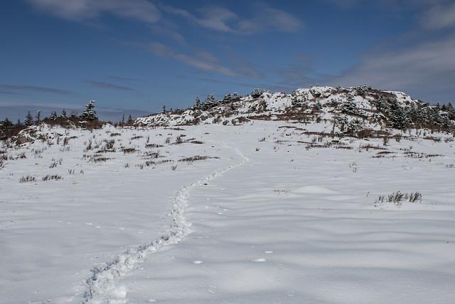 snowy appalachian trail