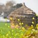 Another village scene by sanat_das