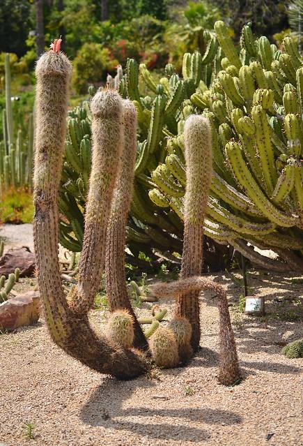 Barcelonan kaktuspuisto