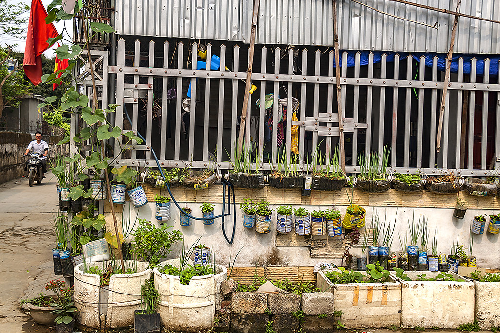 Home gardening--Quy Hop