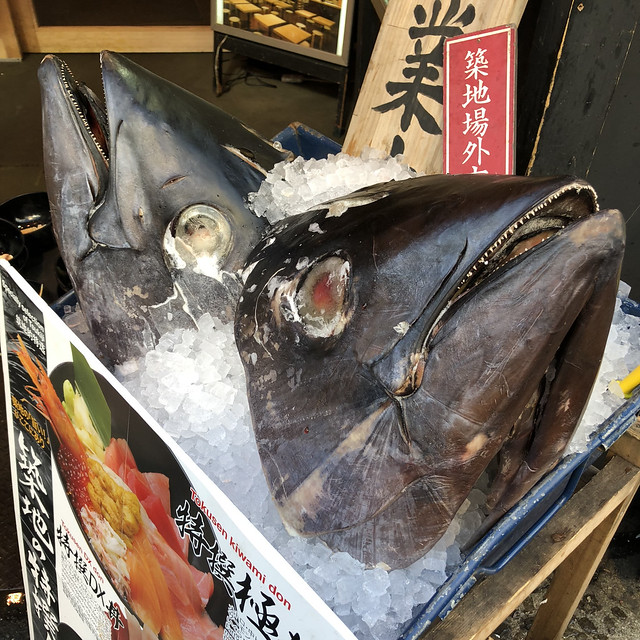 Giant tuna heads at the fish market