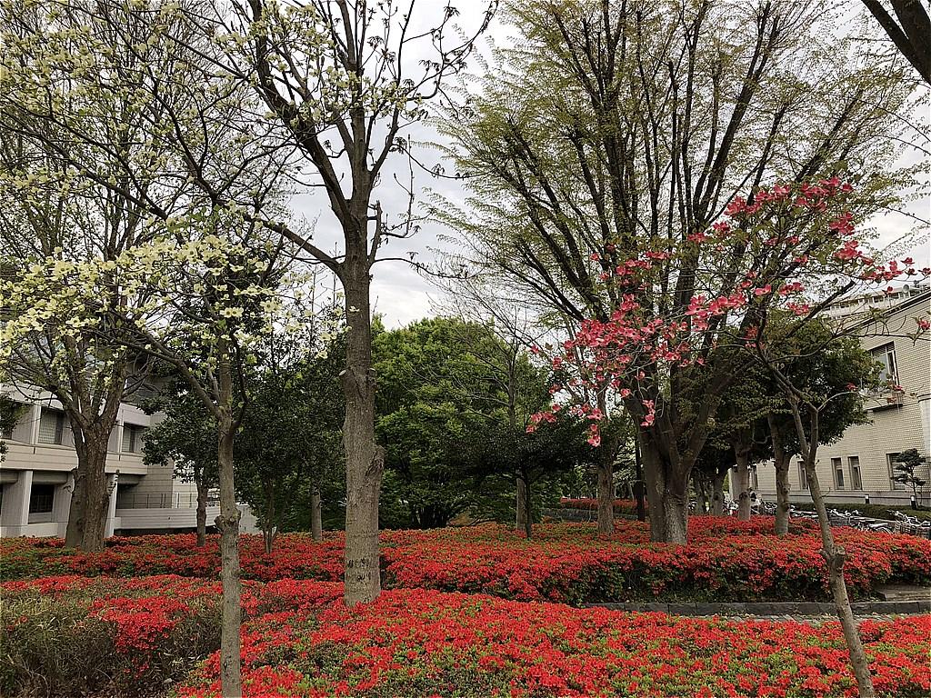 20180407_光ヶ丘 (4)