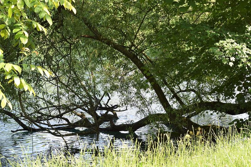 River Aare 24.05 (6)