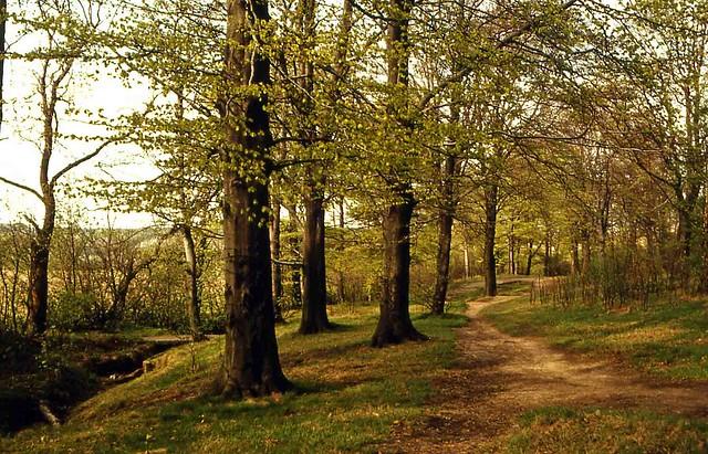 Scoles wood [UK]