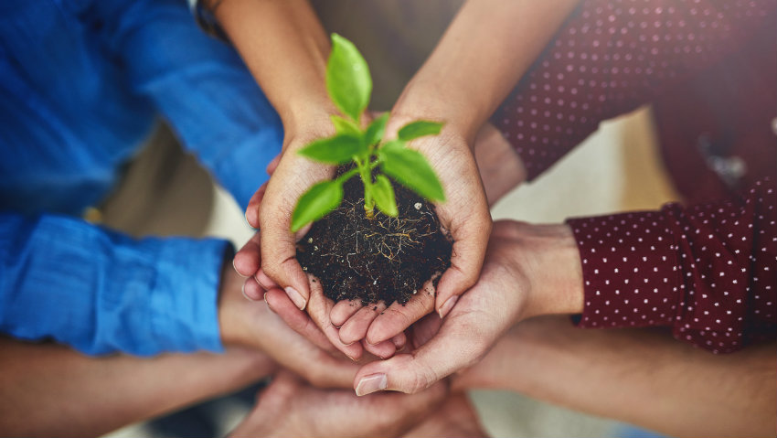 Lots of hands holding a seedling in a pot