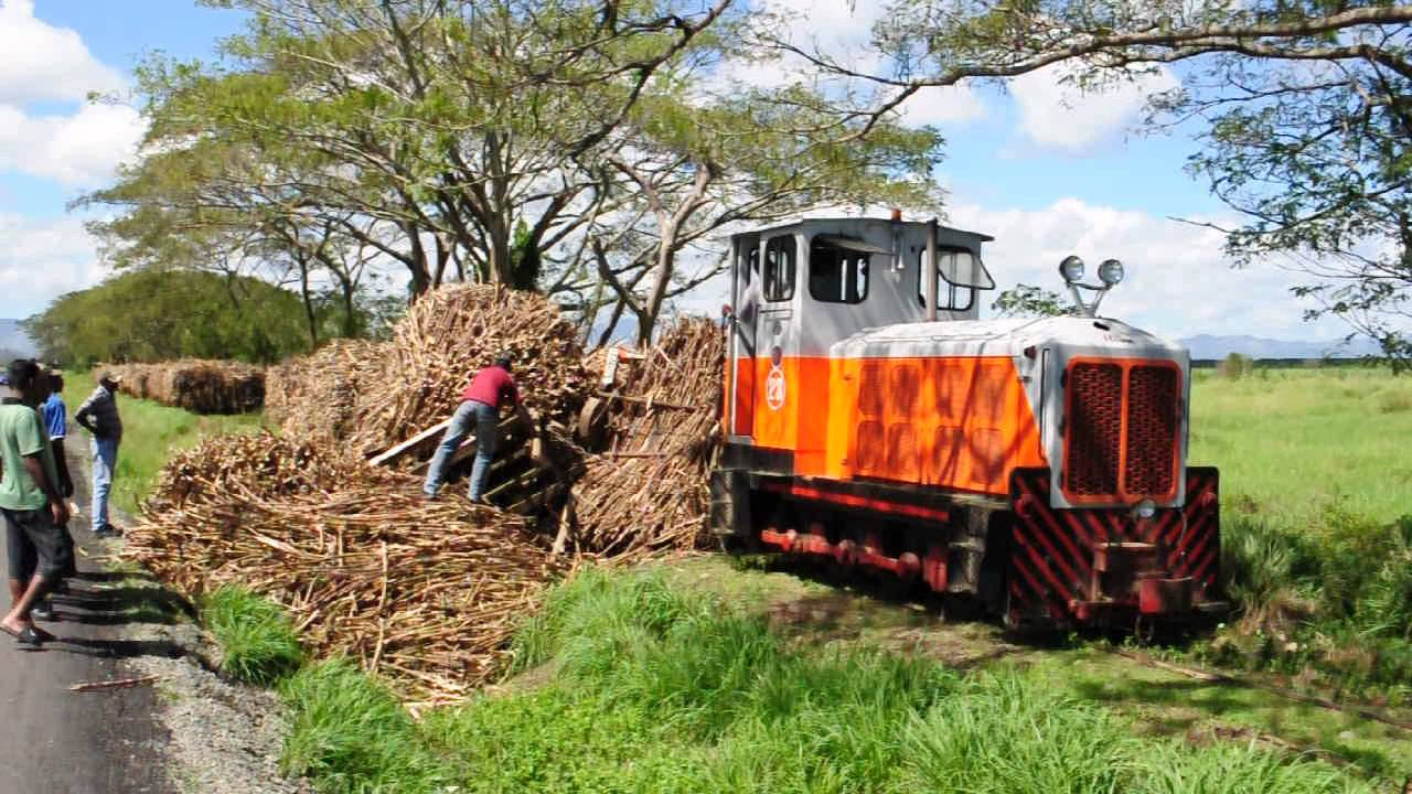 Sugarcane harvesting in Fiji.