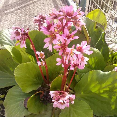 #fiori #morrea #marsica
