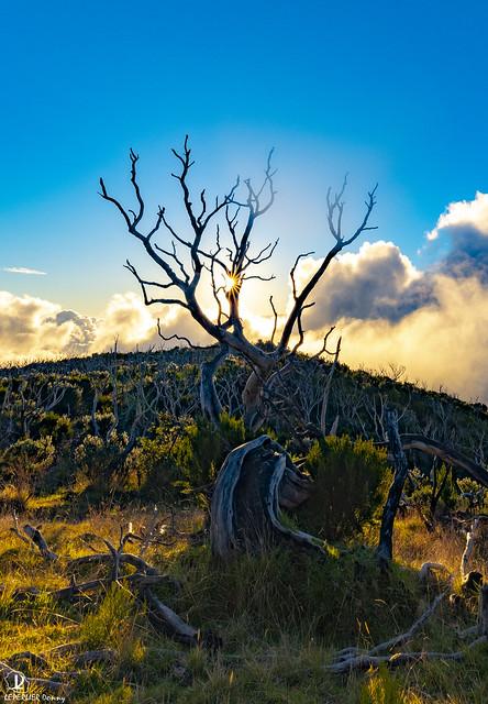 Piton Texton - Ile de la Réunion