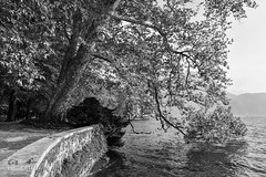 Branches and water