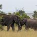Elephant Siblings Greeting by Hector16