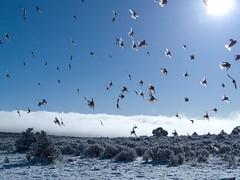 A Flock