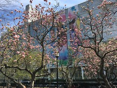 Last of the pink magnolias and World Bank headquarters, Washington, D.C.