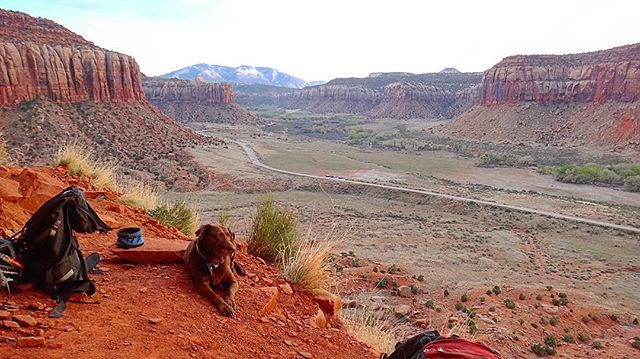 #tbt to Apr '15: Mokka enjoys the chill afternoon vibes at Indian Creek… 🐕🐾✌️😊 #spring #dog #chocolatelab #climbing #indiancreek #utah
