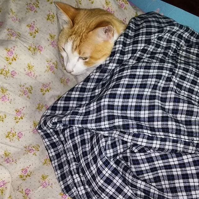 Кот Феликс любит когда ему тепло, но не умеет укрываться одеялом, потому что у него же лапки! Поэтому я его укрыл своими клетчатыми штанами. Теперь ему тепло и уютно, котик лежит и мурлычет на всю комнату :-)