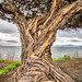 Nothing So Lovely as a Tree by Ron Rothbart