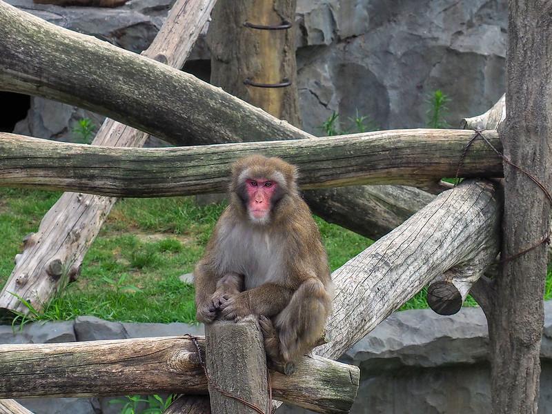 動物園サル160mm相当