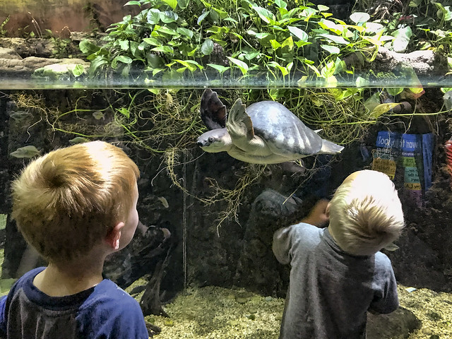 LA Zoo LAIR
