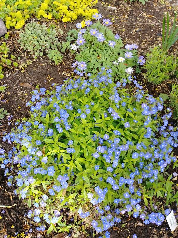 Le jardin de Lavandula 2018 - Page 6 42302102251_5de7ec50f6_c