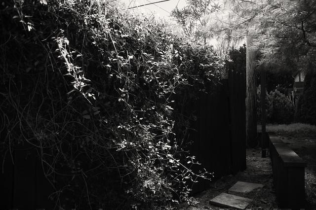 Secret garden b+w