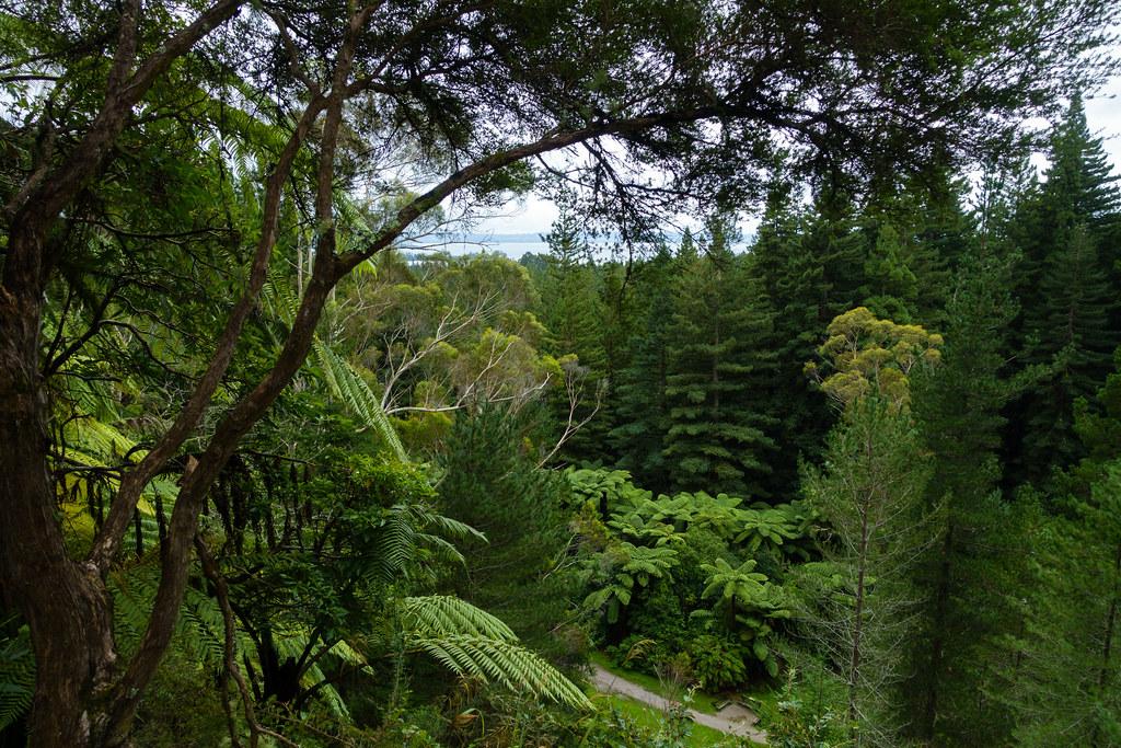 Redwoods-03838