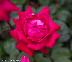 Summer Blooms - 53