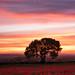 Gorebridge Poppies by Simon Wootton