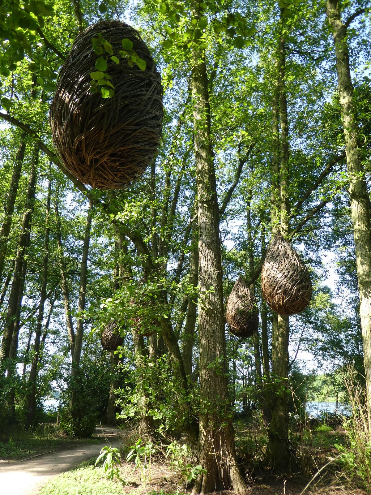 Forest trail, Trentham Gardens