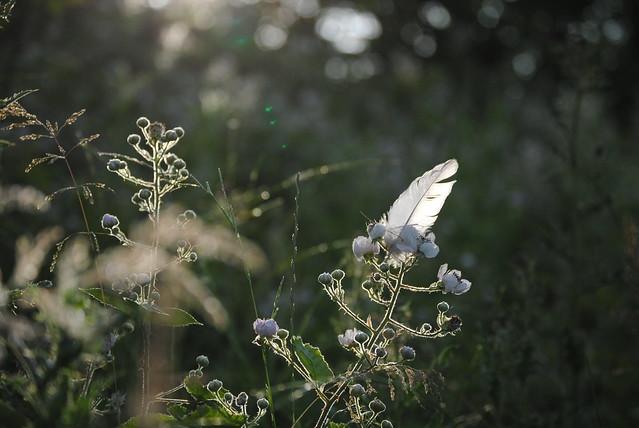 City Of Angel's, Nikon D3000, AF-S DX Zoom-Nikkor 55-200mm f/4-5.6G ED