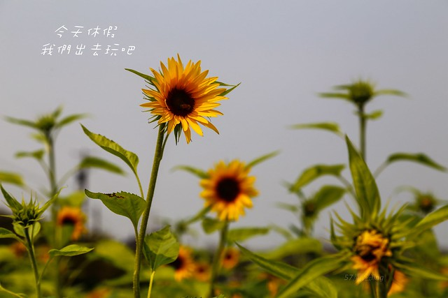 IMG_9986-17