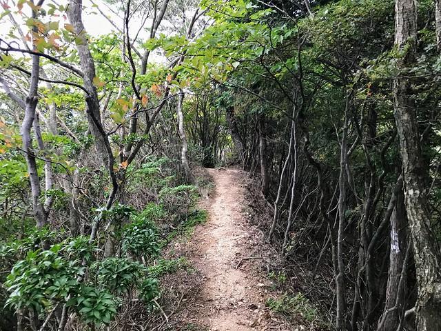 仙ヶ岳 仙鶏尾根 登山道