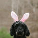Excited about Easter ... by Kasandra_A