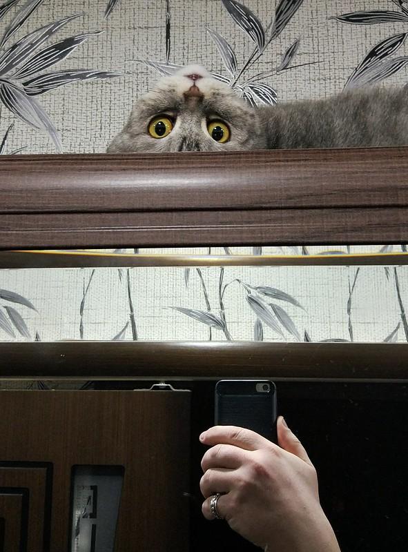 Буся на шкафу